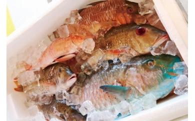 【泊漁港直送】 沖縄美ら海鮮魚セット