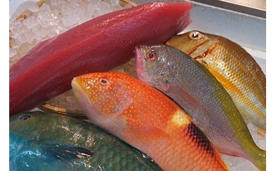 【泊漁港直送】 沖縄美ら海まぐろと旬の沖縄鮮魚セット