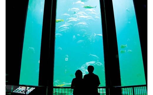 【A-63】足摺海洋館 エサやり体験チケット(親子1組)