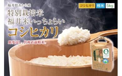 30年福井県産 特別栽培米「いっちょらい」コシヒカリ精米5㎏2袋