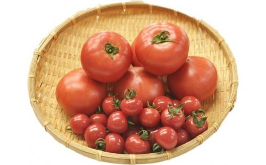 144 庄内トマトとミニトマトのセット