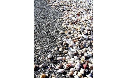 貝殻や植物、土器やガラスなどの漂着物もたくさん