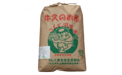 <平成30年度産>特別栽培米 うしく河童米10kg【1044614】