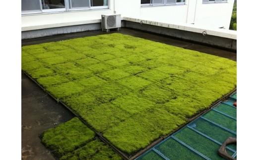 E-15   スナゴケで屋上緑化1㎡
