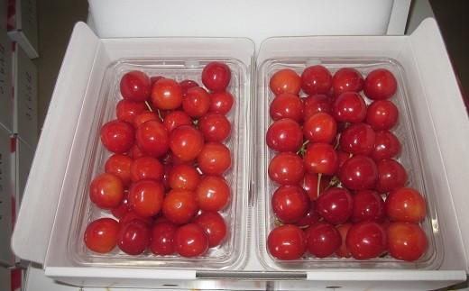 【紅秀峰】松山商店さくらんぼ 特選品Lサイズ以上(7月下旬)