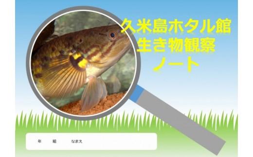【夏休み自由研究】久米島の生態調査隊!自分だけの観察ノートをつくろう