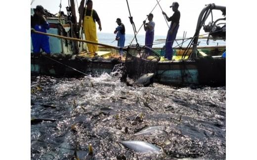 【B-51】煮つけ用漁師おすすめ旬の朝獲れ鮮魚セット【漁師直送】