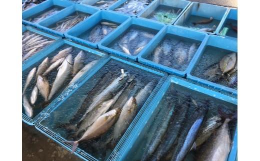 漁港に水揚げされた魚