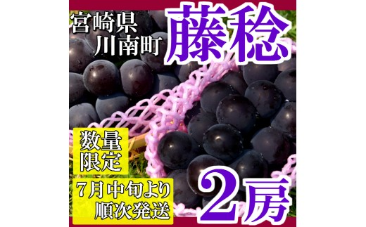 34-01「今井農園」藤稔 2房