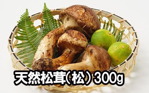 HMG340 【松コース/数量限定!】平成30年度産 天然松茸(松)300g