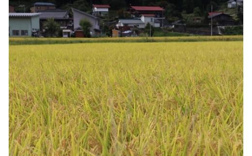 《事前予約制》若手農家のこだわりのお米 新米 特別栽培米コシヒカリ10kg《発送は2018年10月以降》[B0049]