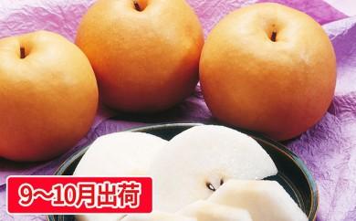 [№5800-0134]最高級 蔵王の梨(新高)約5kg特秀・大玉