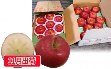 [№5823-0445]贈答用蜜入りこうとくりんご約3kg 大江町産