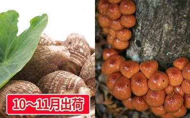 [№5823-0430]土里芋2kg 原木なめこ1kg