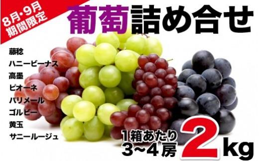 B13 葡萄Aセット