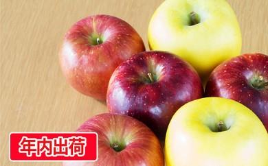 [№5823-0440]ご自宅用旬のりんご詰合せ約10kg(サンふじ確約3~4種)大江町産