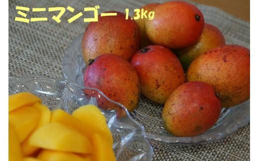 ファン待望!沖縄県東村産『ミニマンゴー』 約1.3kg