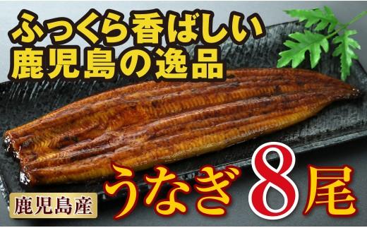 E5-2224/鹿児島産 特上うなぎ155g×8尾!