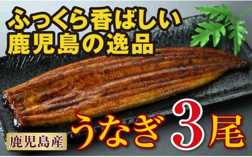 B2-2238/鹿児島産 特上うなぎ155g×3尾!