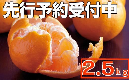 RK-19【訳あり】ポンカン2.5kg