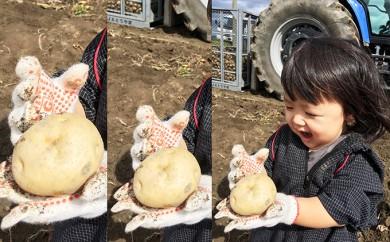 [№5834-0179]北海道洞爺湖町産じゃがいもとうや(M~2L混合)約20kg