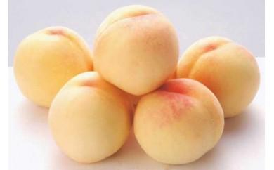 かつらぎ町産 桃の女王『清水白桃』 約4kg ≪ご家庭用≫