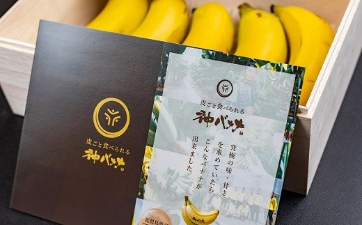 Z877【神バナナ】桐箱入5本セット【名水百選と有機無農薬栽培】【限定100箱】