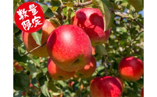 543 ご自宅用 南陽産 ふじりんご 10kg (秀 約46玉)×1箱