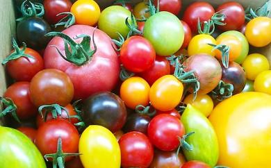 [№5543-0088]カラフルトマト&ミニトマトジュースセット