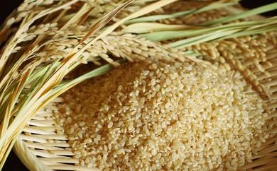 [№5562-0088]宇部市小野『大山産米』 玄米30kg