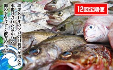 【定期便12回】坂出市海の幸魚市場より直送!朝獲れ鮮魚セット