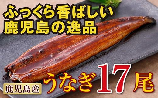 864 鹿児島産特上うなぎ17尾!