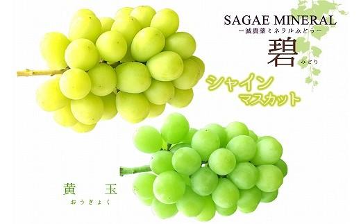 <もぎたて直送>シャインマスカットと高級ぶどう黄玉の食べ比べセット「碧」1kg以上! 010-B26