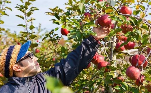 【276】 農家から食べ頃で届く果物セット《予約受付中 9~12月発送予定》
