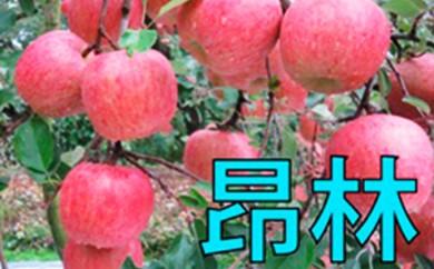 [№5764-0333]鹿角りんご 『昂林』 約10kg(40~46玉入)【とざわりんご園】