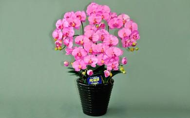 [№5809-2341]光触媒アートフラワー(造花) コチョウランM5本立 ピンク