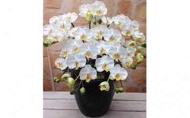 [№5809-2338]光触媒アートフラワー(造花) コチョウランS5本立 白