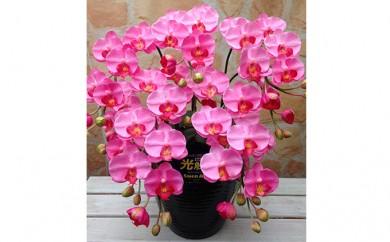 [№5809-2339]光触媒アートフラワー(造花) コチョウランS5本立 ピンク