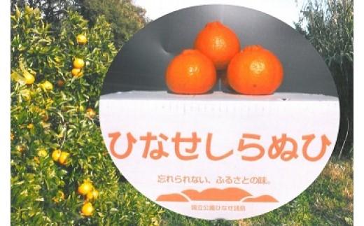 A-0089 ひなせしらぬい 5kg(3月発送)