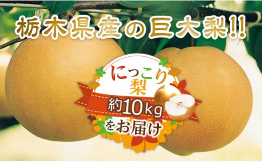 N06【栃木県産梨】にっこり梨・約10kg(10玉程度)