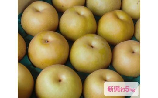 No.021 日本梨「新興」(しんこう)約5kg