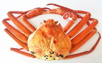 [№5683-0136]【特選】新湊産紅ズワイガニ(安吉タグ付き約1kg)【安吉水産】