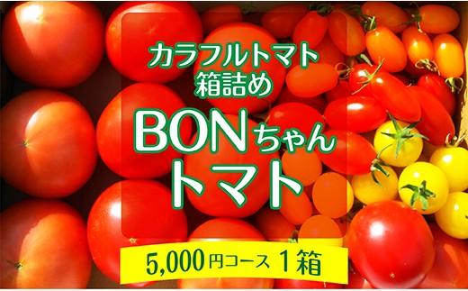 005-013 BONちゃんトマト箱詰め【1箱】