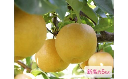 No.022 日本梨「新高」(にいたか)約5kg