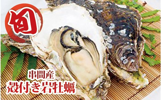 L-3 数量限定!濃厚な味わい【串間産殻付 岩牡蠣 12~14個(加熱用)】
