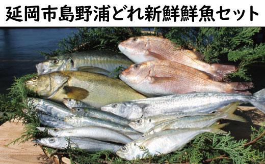 K3 「延岡市島野浦どれ新鮮鮮魚」セット