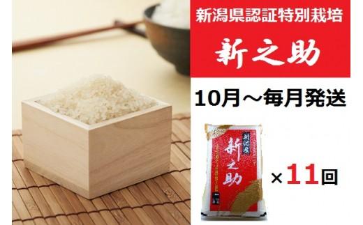 [E907]【定期便】新潟県認証特別栽培新之助(5kg×毎月11回)