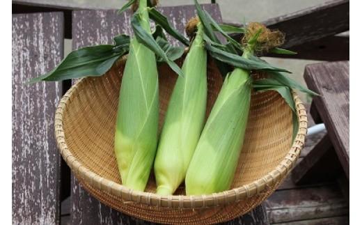 生とうもろこし(品種:サニーショコラ)×12本 夏の味覚です。