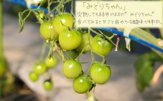 """「みどりちゃん」 完熟しても緑色のままの""""みどりちゃん""""、食べてみると甘さと爽やかな酸味が特徴。"""
