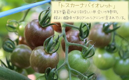「トスカーナバイオレット」 まるで葡萄のような珍しい色合いが特徴。程よい酸味がありアントシアニンが含まれている。